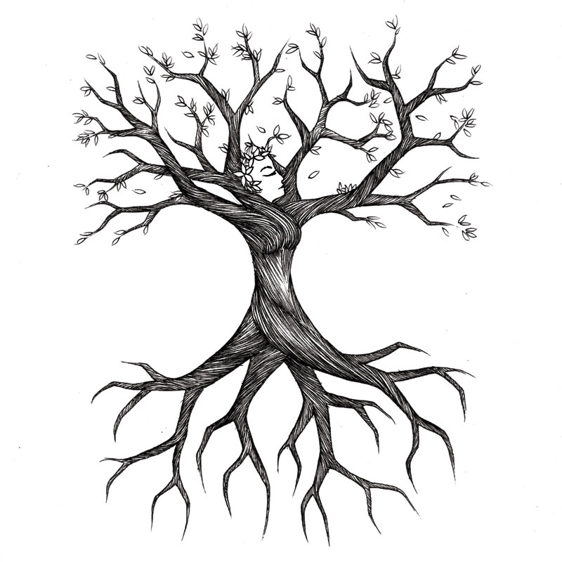 drawing-of-tree-and-roots